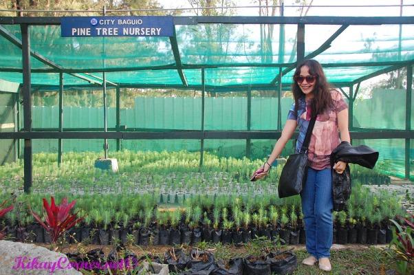 Pine Tree Nursery